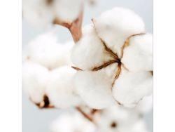 Tissu 100% coton biologique